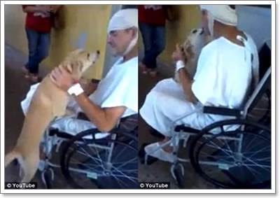 Dogilike.com :: ซึ้ง! สุนัขรอชายจรจัดที่ได้รับบาดเจ็บหน้าโรงพยาบาลนาน 8 วัน