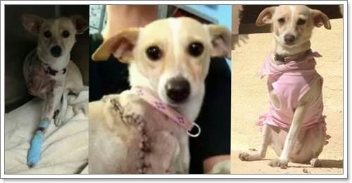 Dogilike.com :: สุดซึ้ง! สุนัขพิการ 3 ขา ได้รับการช่วยเหลือ มีบ้านใหม่ที่อบอุ่น