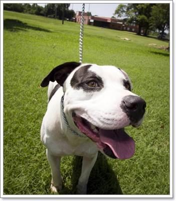 Dogilike.com :: ผลิตภัณฑ์และอุปกรณ์จำเป็นสำหรับการกรูมมิ่งหมาขนสั้น