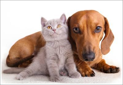Dogilike.com :: ข้อควรรู้ ... ทำไมน้องหมาห้ามกินอาหารแมวเหมียว?