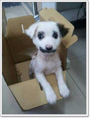 Dogilike.com :: รวม 33 ภาพถ่ายสุนัขที่มีลายและสีขนแปลกเป็นเอกลักษณ์ !