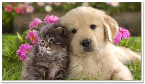 Dogilike.com :: จะจัดการยังไงเมื่อน้องหมาต้องอยู่ร่วมกับน้องแมว!