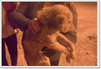 Dogilike.com :: ชื่นชม! กลุ่มเด็กช่วยชีวิต 3 สุนัขถูกทิ้งในบ่อน้ำเก่าลึก 16 ฟุต