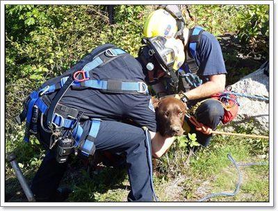 Dogilike.com :: รอดตาย! ดับเพลิงช่วยชีวิตสุนัข หลังตกหน้าผาลึก 20 ฟุต