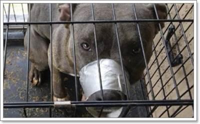 Dogilike.com :: ตร.จับเจ้าของหลังใช้เทปกาวพันปากสุนัขและขังไว้ในกรงแคบ!