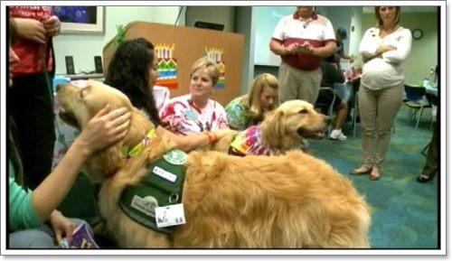 Dogilike.com :: น่ารัก! รพ.มะกันจัดงานวันเกิดให้สุนัขบำบัดที่คอยช่วยเหลือผู้ป่วย