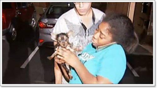 Dogilike.com :: โชคดี! ลูกสุนัขจิ๋วรอดตายหลังตกท่อระบายน้ำลึก 3 ฟุต