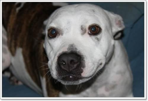 Dogilike.com :: อาลัย! สุนัขฮีโรสละชีวิตปกป้องเจ้าของจากปลาฉลาม