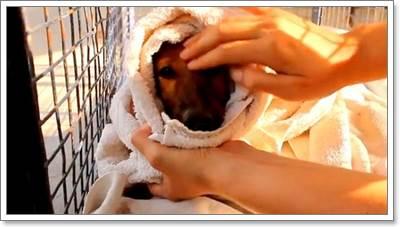 Dogilike.com :: ประทับใจ! องค์กรช่วยเหลือสัตว์อินเดียช่วยลูกสุนัขตกบ่อน้ำ