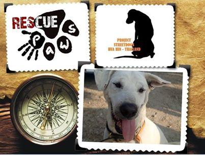 Dogilike.com :: โครงการ Rescue Paws สัตวแพทย์แลกเปลี่ยน