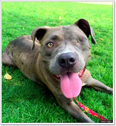 Dogilike.com :: น่าสงสาร! สุนัขผอมโซถูกช่วยเหลือ หลังพบถูกทิ้งในสวนสาธารณะ