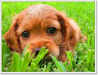 Dogilike.com :: เทคนิคง่าย ๆ ในการเลือกซื้อน้องหมาใหม่จากฟาร์ม