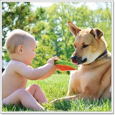 Dogilike.com :: น่ารัก! หนูน้อยและเจ้าตูบ คู่ซี้สุดป๊อบในอินสตาแกรม