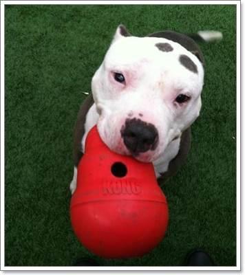 Dogilike.com :: ศาลสั่งจำคุกเจ้าของสูงสุด 15 ปี 6 เดือน หลังทารุณสุนัขจนตาบอด