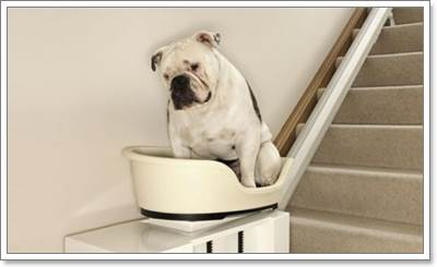Dogilike.com :: 6 เทคโนโลยีสุดล้ำช่วยทุนแรงเจ้าของในการเลี้ยงสุนัข