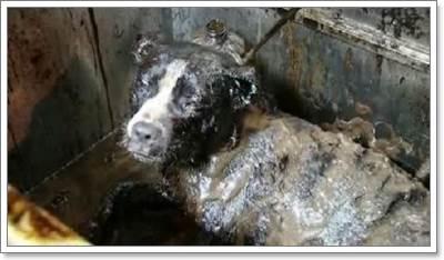 Dogilike.com :: 2 ตูบรอดตาย หลังพบโดนกาวเคมีจากโรงงานอุสาหกรรมร้าง!