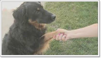 Dogilike.com :: สุดงง! เจ้าของเจอแหวนแต่งงานในท้องตูบ หลังตามหานาน 6 ปี