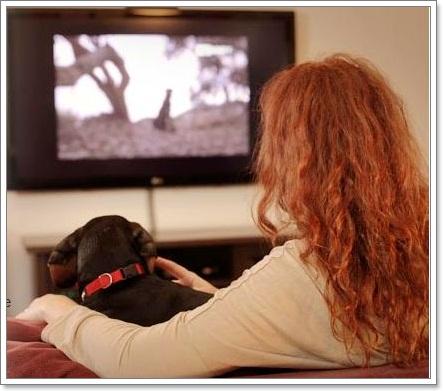 Dogilike.com :: 6 เทคโนโลยีสุดล้ำที่ใช้ในการเลี้ยงน้องหมา