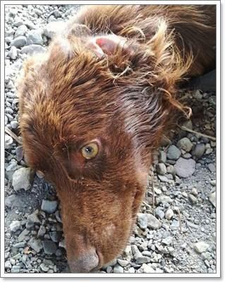Dogilike.com :: เกือบไม่รอด! พบสุนัขผอมแห้งถูกทิ้งในถุงขยะประเทศอิตาลี