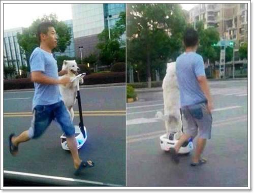 Dogilike.com :: น่ารัก! ตูบจีนแสนรู้ขับเซกเวย์ เดินเล่นกับเจ้าของในจีน