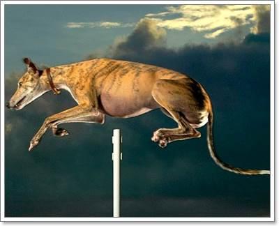 Dogilike.com :: ต้องดู! 15 สุนัขสุดเจ๋งที่ถูกบันทึกไว้ในสถิติโลก