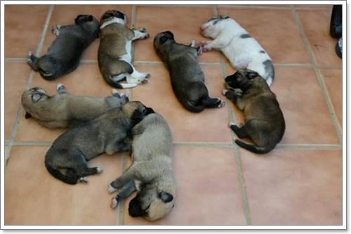 Dogilike.com :: ช็อค! พบลูกสุนัข 8 ตัว ถูกทิ้งเกลื่อนถนนในสเปน