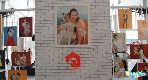 Dogilike.com :: Dogilike พาตะลุยงาน สี่ขาขาจร-Give a chance 2014