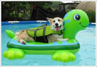 Dogilike.com :: 5 พฤติกรรมของผู้เลี้ยงในเมืองที่ส่งผลเสียต่อสุขภาพสุนัข