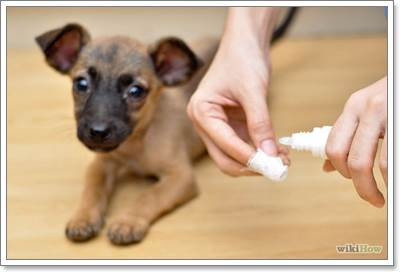 Dogilike.com :: 4 วิธีรักษาสุนัขด้วยตัวเองที่ทำให้สัตวแพทย์ปวดหัว