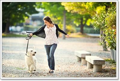 Dogilike.com :: 6 วิธีเลี้ยงสุนัขอย่างรับผิดชอบ เพื่อไม่ให้มีปัญหากับเพื่อนบ้าน