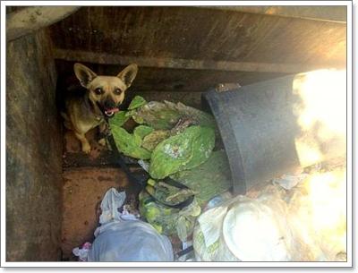 Dogilike.com :: รอดตาย! พลเมืองดีพบสุนัขถูกทิ้งถังขยะในสหรัฐฯ