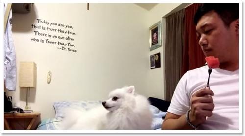 Dogilike.com :: สุดฮา! คลิปตูบทำเมินแตงโมในมือเจ้าของ แต่กล้องจับภาพได้