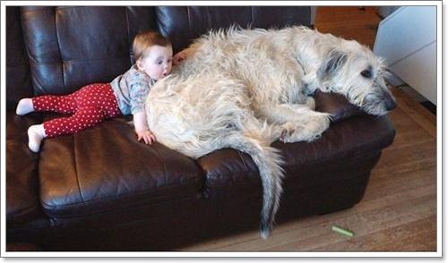 Dogilike.com :: บันทึกโลก! Finnegan สุนัขที่มีหางยาวที่สุดในโลก
