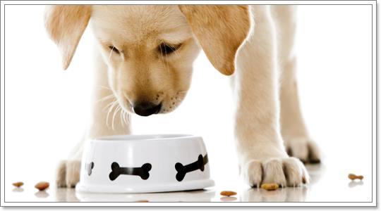 Dogilike.com :: เปรียบเทียบชัดๆ อาหารประเภทไหนดีกับสุนัขที่สุด !