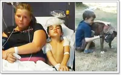 Dogilike.com :: ยอดฮีโร่! พิทบูลเทอร์เรีย ช่วยชีวิตเด็ก 8 ขวบ จากฝูงผึ้ง