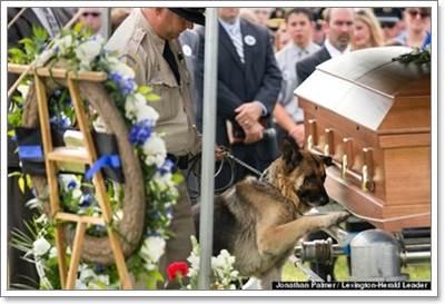 Dogilike.com :: อาลัย! ภาพสุนัขตำรวจใช้อุ้งเท้าแตะโรงศพนายตำรวจคู่ใจ