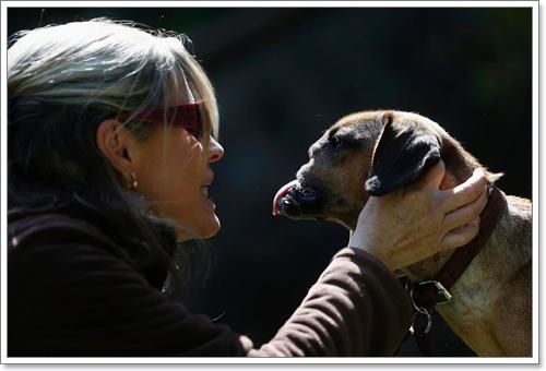 Dogilike.com :: ปาฏิหาริย์! สุนัขรอดตายหลังถูกเจ้าของใช้มีดฟันใบหน้า