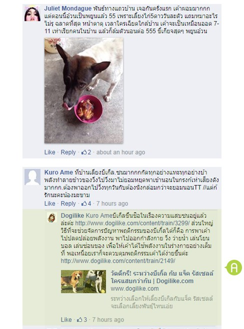 dog close-up, infographic, dog infographic, หมา, สุนัข, ถูกทิ้ง, ซน, พิทบูล, เทอเรียร์, บีเกิ้ล, โกลเด้น รีทรีฟเวอร์, ไซบีเรียน ฮัสกี้, พันธุ์ทาง