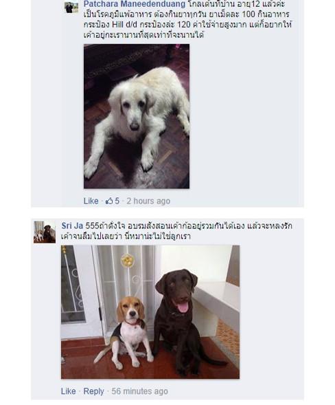 dog close-up, infographic, dog infographic, ���, �عѢ, �١���, ��, �Է���, ��������, ������, ���� �շ�տ�����, 䫺����¹ ��ʡ��, �ѹ���ҧ