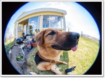 Dogilike.com :: รวมภาพน่ารักๆ Dogfisheye