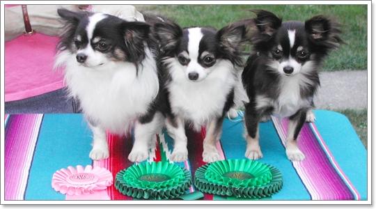 Dogilike.com :: โฉมหน้าน้องหมาที่คว้ารางวัลจากเวทีประกวดต่างๆ