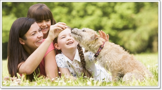 Dogilike.com :: รวมภาพความอบอุ่น ต้อนรับวันแม่