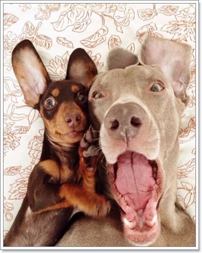Dogilike.com :: รวมภาพน้องหมาเซลฟี่ (dog selfie)