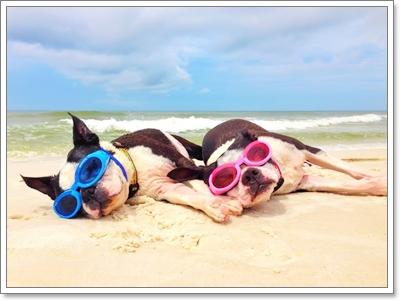 Dogilike.com :: รวมภาพน้องหมากับทะเลแสนสวย