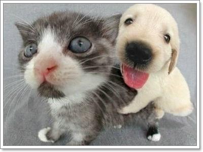 Dogilike.com :: รวมภาพฮ่าๆ ของพี่หมาน้องเหมียว