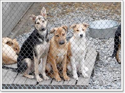 Dogilike.com :: รวมภาพน้องหมาในศูนย์พักพิงทั่วโลก