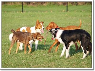 Dogilike.com :: น้องหมากับกิจกรรมในสวนสวนสาธารณะ