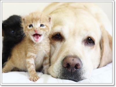 Dogilike.com :: แม่หมากับลูกแมวสุดเลิฟ