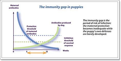 Dogilike.com :: 7 เรื่องจริงเกี่ยวกับการฉีดวัคซีนในสุนัขที่เราควรรู้
