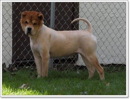 Dogilike.com :: Д╒╒Им╒Им╖Ц╗!! ╩я╜кр╒╧цХг╖╗р║║рц╣я╢╒╧ (Post-Clipping alopecia)